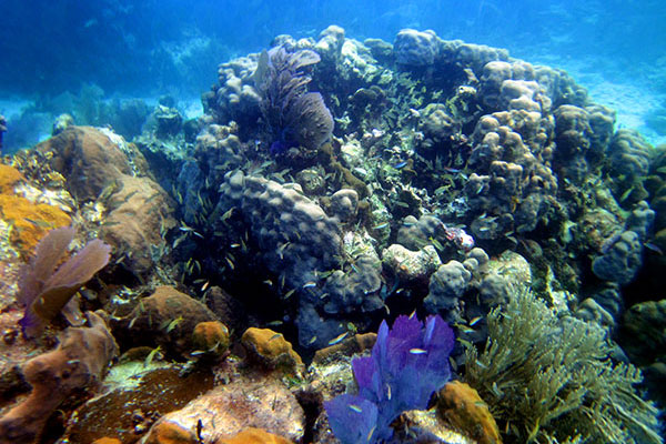 View of Coral